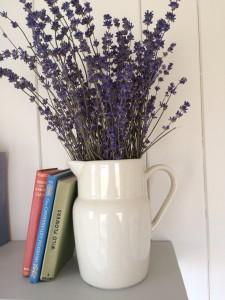 Hastings lavender
