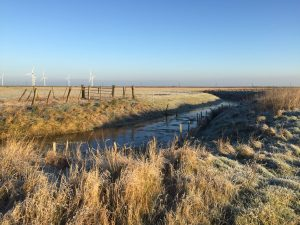 Walland and Romney Marsh glamping
